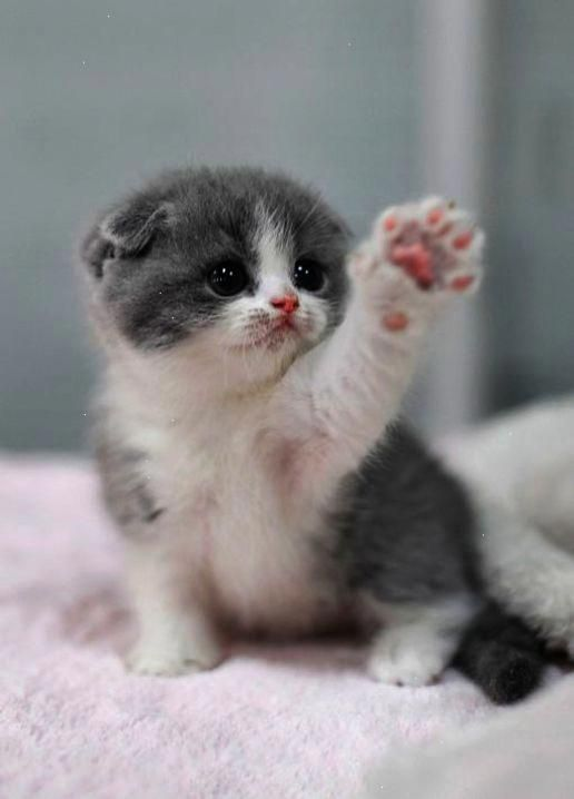Cute Animals To Draw Simple Cute Baby Animals Video Download Cutestcatsandkittensever Cute Baby Cats Cutest Kittens Ever Baby Animals Super Cute