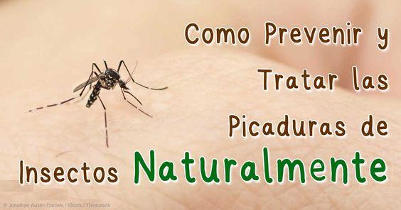 Muchas hierbas y agentes naturales tienen propiedades antiinflamatorias que pueden ayudar a tratar cualquier picadura de insectos y mosquito. http://espanol.mercola.com/boletin-de-salud/tratamiento-para-piquetes-de-insecto.aspx