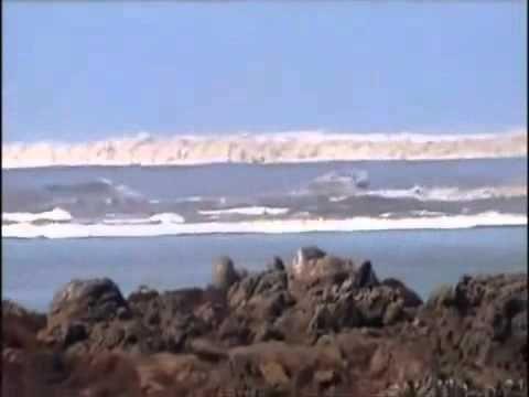 Pin On Tsunamis