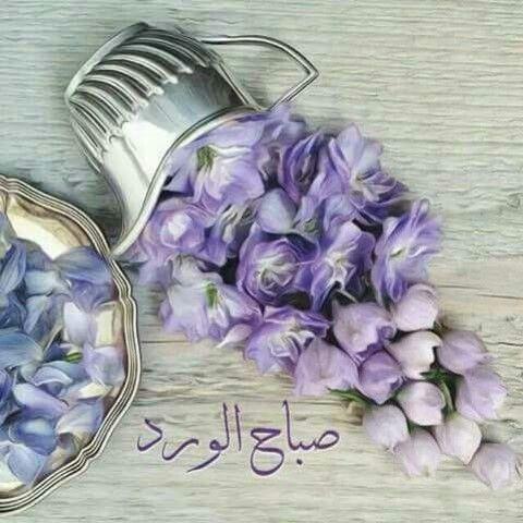 Pin By Najwa Fadda On صباح الخير Morning Greeting Purple Flowers Beautiful Morning