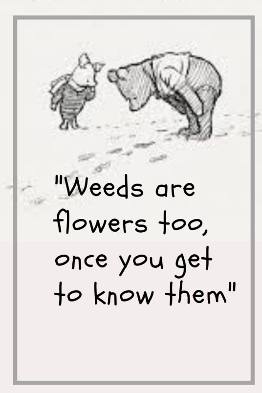 Amazing Facts and Outstanding Quotes from Winnie The Pooh by A A Milne – After Eleven Books and Chat
