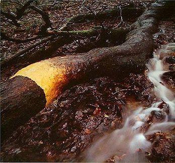 beauty of nature essay