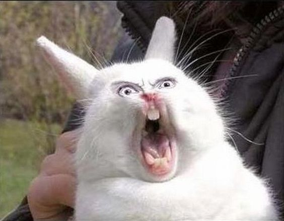 Image result for crazy bunny