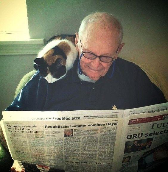Gatos melhores amigos do homem