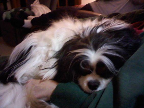 Murphy sleeping.