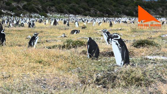 Pingüinera de la Isla Martillo