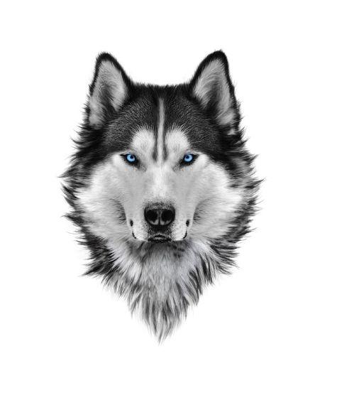 Framed Art Canvas Print Wolf With Blue Eyes Siberian Husky Blue