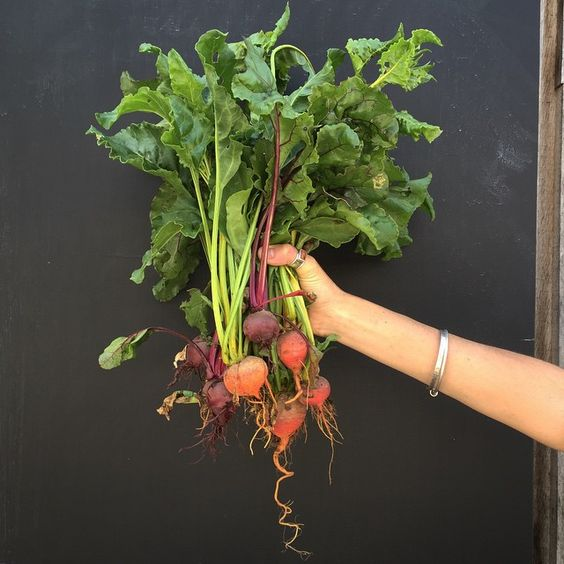 First of the beets Fresh from the earth. Thank you Tamsin (our gardener) #fforest #fforestcooking #gatheredstyle