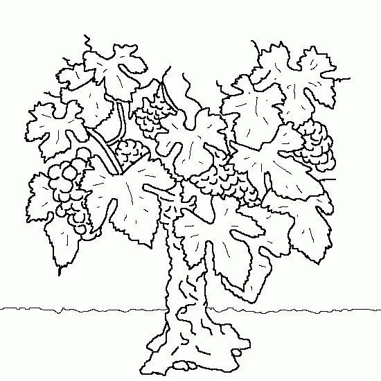 Dessin De Cep De Vigne Coloriage De Fruits Legumes A Imprimer Les Meilleurs Coloriages Sur Www Coloriage Jeux Com Dessin De Vigne Coloriage Cep De Vigne