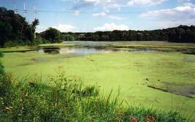 AIRLIFE te comenta. ¿tu sabes que es la eutrofización? Es causada por un exceso de nutrientes vegetales en el agua. Que hace que diversas plantas como algas, y lentejas de agua crezcan tanto que bloqueen la luz , debido  a esto el ecosistema se ve afectado sus principales detonantes son los contaminantes del nitrógeno, y amoniaco.