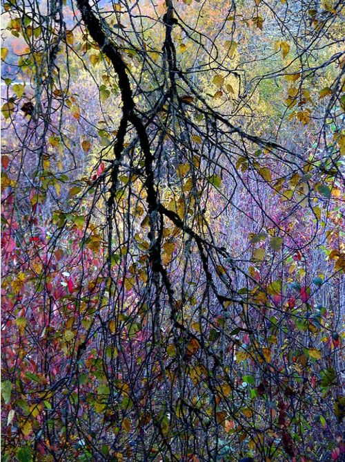 """""""Now every field is clothed with grass, and every tree with leaves; now the woods put forth their blossoms, and the year assumes its gay attire.""""  ~Virgil"""