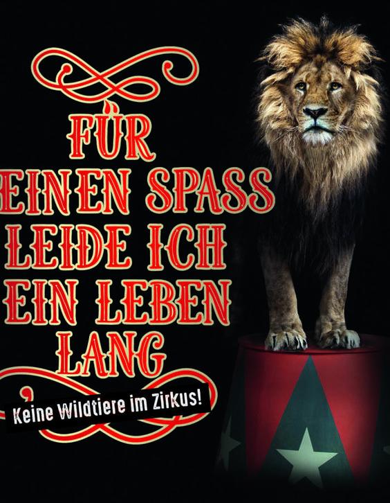 England: Verbot von Wildtieren im Zirkus