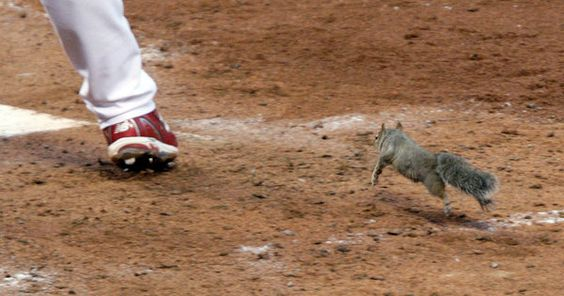 Rally squirrel is the cutest!