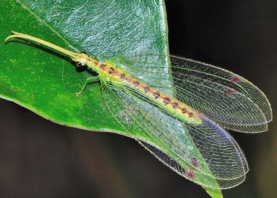 Lacewings and Green on Pinterest