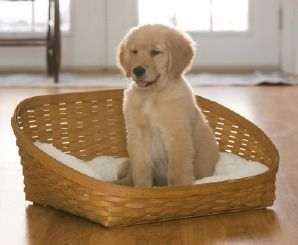 Show your pet the comforts of home with the #Longaberger Pet Bed Baskets! Perfect for all of the furry friends in your life, this pet bed is cozy for your pet and stylish for your home! #NationalDogDay #longabergerbaskets #homedecor #pets #dog #cat