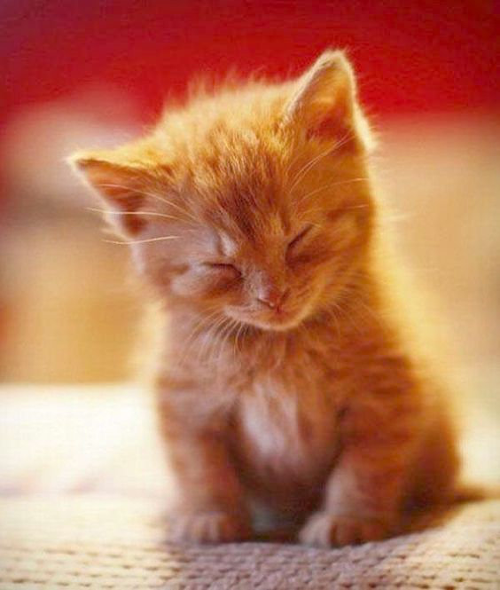 Cute Pictures Of Animals Below Cute Fluffy Puppies And Kittens Where Cute Animals Cartoon Animated Kittens Cutest Cute Kitten Gif Cute Animals