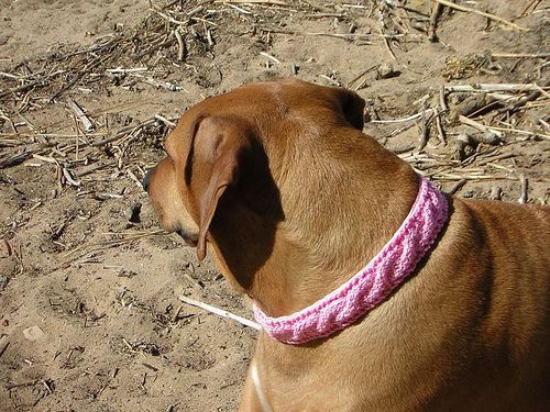 why didnt I think of knitting dog collars? Things to make Pinterest ...