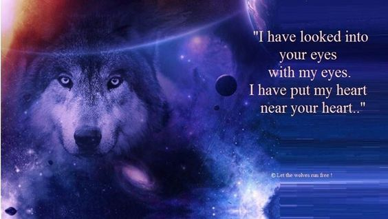 Let the wolves run free...please like & share on Facebook..thanx :)