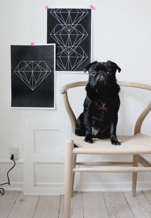 Spotted: A Pug Named Elliott