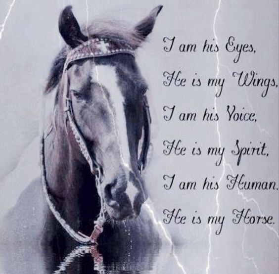 Beautiful quote about the bond between a person and their horse...