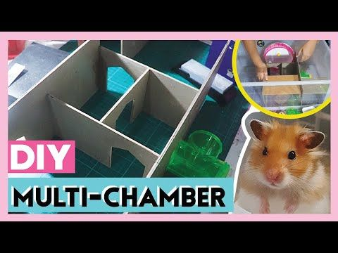 Multi Chamber Setup Hamster Bin Cage Diy And Cage Cleaning Miakamille Philippines Youtube Hamster Bin Cage Hamster Hamster Diy