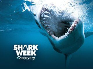 shark week--one of the great joys of summer