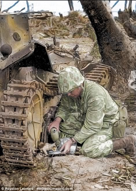 A camouflaged Marine, one of the initial invaders of Tarawa, shares his water with a kitten in the shade of a wrecked tank after cessation of hostilities