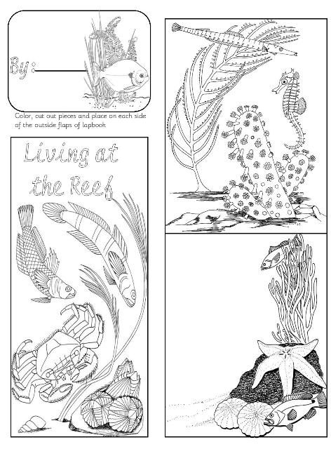 hawaiian coral reef coloring pages - photo#18
