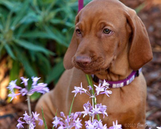 All sizes | Roso Eating Allium | Flickr - Photo Sharing!