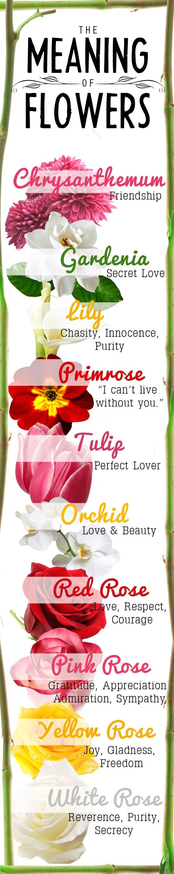 flores e o seu significado