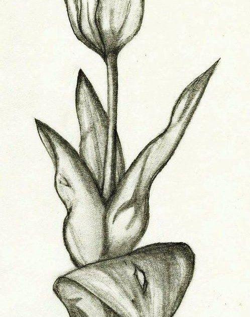 Terbaru 30 Lukisan Bunga Yang Simple Sketsa Gambar Bunga Tulip Nan Unik Bunga Tulip Sketsa Download Gambar Lukisan Bunga Gambar Bunga Lukisan Bunga Bunga