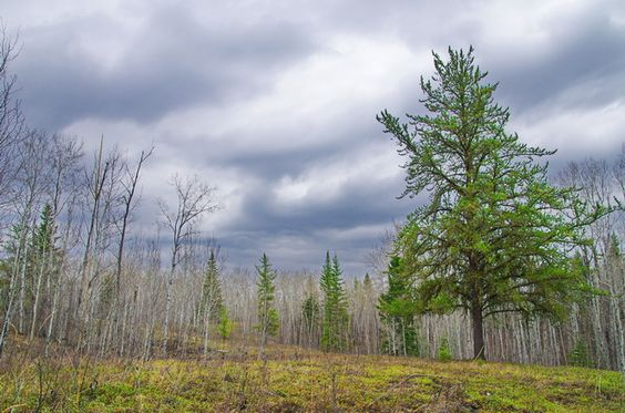 Beautiful scenery near the Boreal Trail, Saskatchewan