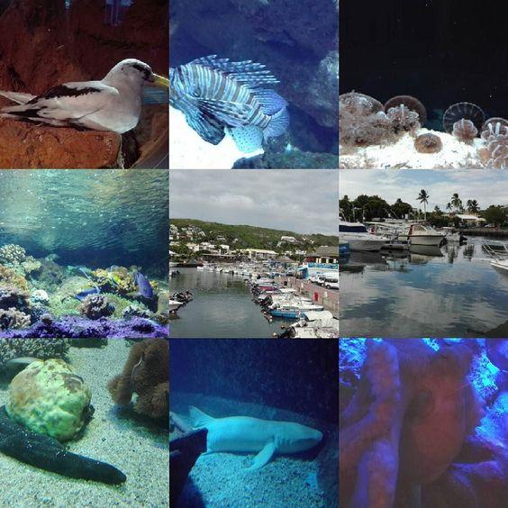 Extrait de la visite à l'#aquarium de #lareunion ! C'est magnifique toutes ces espèces! #aquarium #poissons #stgilles #reunionisland #holidays by cecile_de_la_reunion