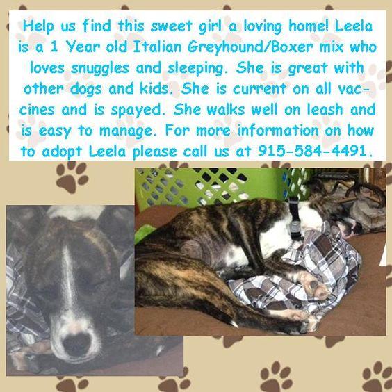 Help us find Leela a good home!