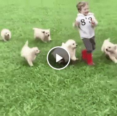 Criança brincando com filhotes.