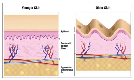 Learn how hyaluronic acid slows the aging process.