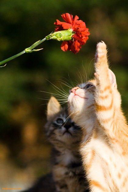 花と遊ぶ野良猫の子)