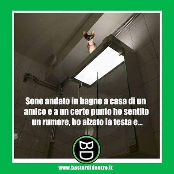 #bastardidentro #bagno #gatto #ipnoticamentebastardidentro www.bastardidentro.it