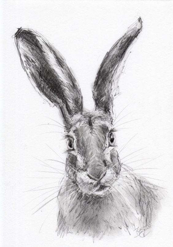 Format A4 ORIGINAL dessin au crayon d'un lièvre par Animal artiste Belinda Elliott