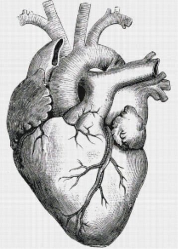 Detailed Heart Drawing : detailed, heart, drawing, Heart, Ventricles, Medical, Illustration, Counted, Cross-Stitch, Pattern, Chart, Drawing,, Anatomy