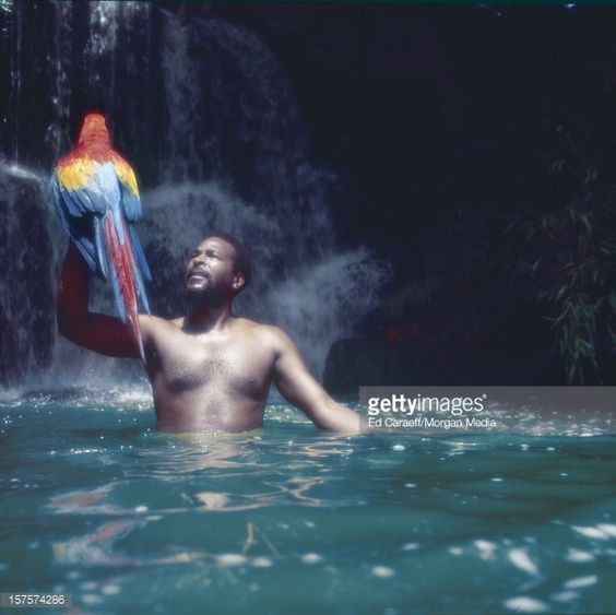 Photo d'actualité : Singer songwriter Marvin Gaye poses for a...