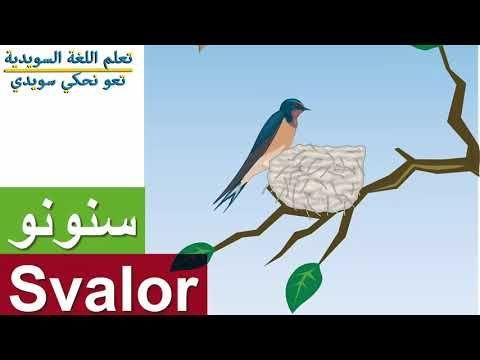مفردات الطيور باللغة السويدية تعلم أسماء الطيور السويدية اسماء الحيوانات في اللغة السويدية Youtube