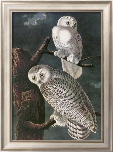 Snowy Owl Posters by John James Audubon - AllPosters.ca