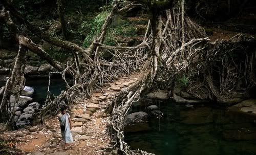 Rainforest of Meghalaya