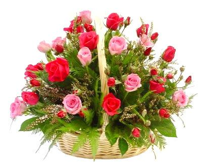 A beautiful combination of pink and red roses furnish in a basket with green ferns and petals. We provide flower gifts for occasions like Birthday, Anniversary, Valentine, Christmas and New Year. We delivered fresh flowers from our florist across India.: