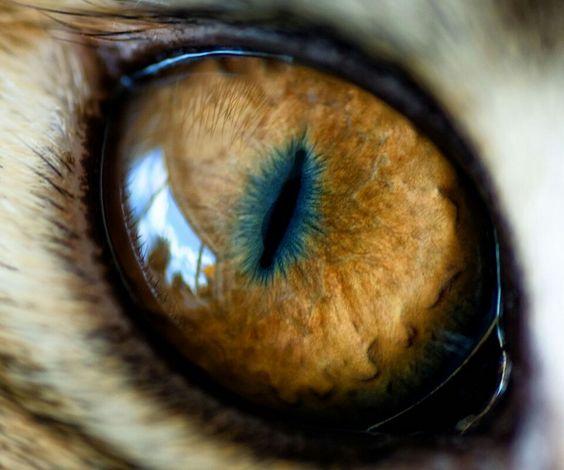 ... Mordor Eye ...