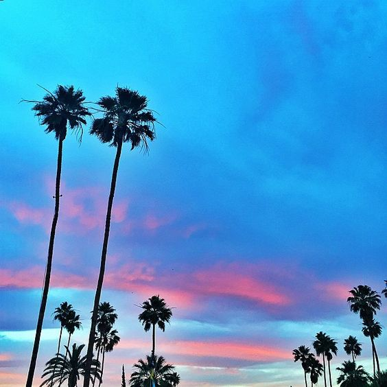Welcomed by these vivid colors in Palm Springs on our way to the @louisvuitton welcome dinner  #LVCruise #LVPalmSprings
