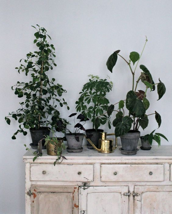 johanna bradford's guide to keeping indoor plants alive via http://www.scandinavianlovesong.com/2016/01/weekly-wrap-up-x-1.html