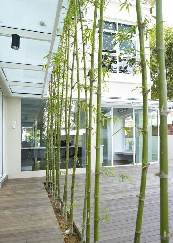 privacy or natural divider in yard, bamboo gets pretty full...it's great