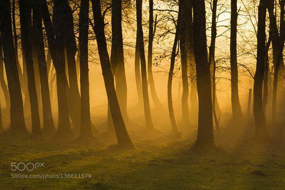 Abend im Wald by FabianSigler